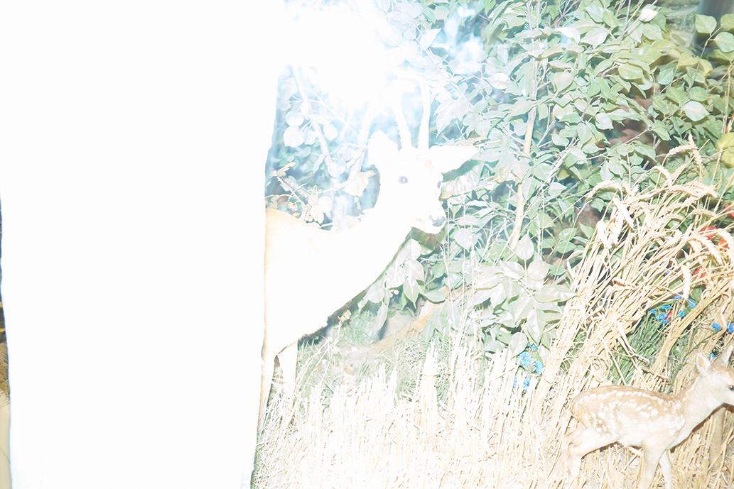 _DSF2965-libro pietracupa